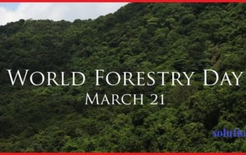 World-Forestry-Day