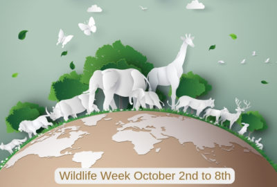 wildlife week in india
